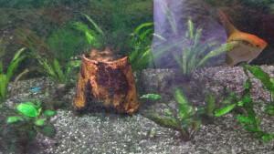Aquarium vorher