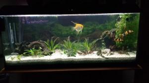 Aquarium001